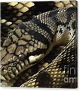 Scrub Python Abstraction Canvas Print