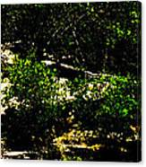 Scrubland Texas Canvas Print