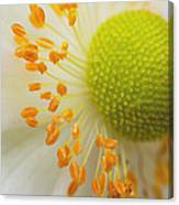 Sea Anemone Abstract Canvas Print