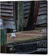 Sea Birds Dockside Canvas Print