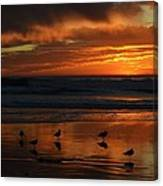Sea Birds  Leucadia Ca  2013 Canvas Print