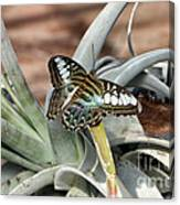 Sea Blue Butterfly Two Canvas Print