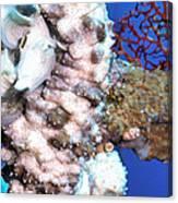 Sea Cucumbers 1 Canvas Print