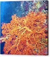 Sea Fans 6 Canvas Print