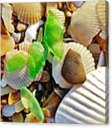 Sea Glass And Shells 17 10/2 Canvas Print