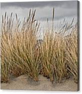 Sea Grass And Sand Canvas Print