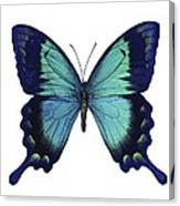Sea Green Swallowtail Butterfly Canvas Print