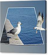 Sea Gull Away Out Of Bounds Canvas Print