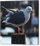 Sea Gull On Break Canvas Print