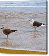 Sea Gull Pair Canvas Print
