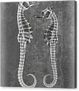 Sea Horses Sea Shell X-ray Art Canvas Print