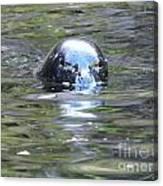 Sea Lion 2 Canvas Print