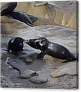 Sea Lion Kiss  Canvas Print