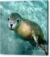 Sea Lion On The Seafloor Canvas Print