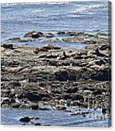 Sea Lion Resort Canvas Print