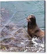 Sea Lion Smile Canvas Print