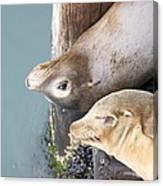 Sea Lions Canvas Print