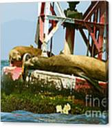 Sea Lions Floating On A Buoy In The Pacific Ocean In Dana Point Harbor Canvas Print