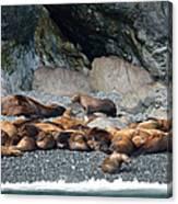 Sea Lions On The Sea Shore Canvas Print