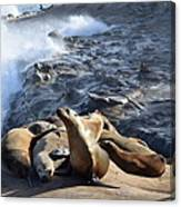 Sea Lions Seek Shelter Canvas Print