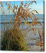 Sea Oats 1 Canvas Print