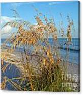 Sea Oats 2 Canvas Print
