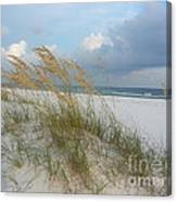 Sea Oats  Blowing In The Wind Canvas Print