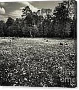 Sea Of Dandelion - Bw Canvas Print
