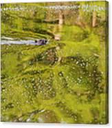 Sea Of Green Square Canvas Print