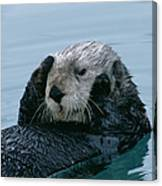 Sea Otter Grooming Canvas Print