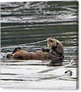 Sea Otter Profile Canvas Print