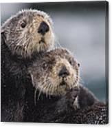 Sea Otters Huddled Together Canvas Print