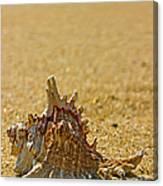 Sea Shell By The Sea Shore Canvas Print
