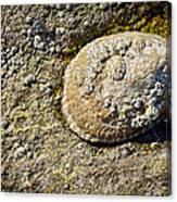 Sea Shell Rock Canvas Print