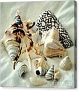 Sea Shells- Colorful Collection Canvas Print