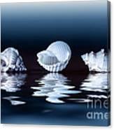 Sea Shells On Water Canvas Print