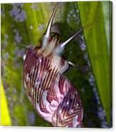 Sea Snail On Seagrass Canvas Print