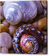 Sea Snail Shells Canvas Print