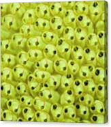 Sea Squirt (clavelina Lepadiformis Canvas Print