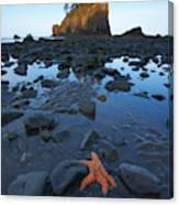 Sea Stacks And Star Fish Canvas Print