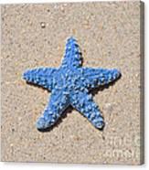 Sea Star - Light Blue Canvas Print