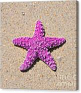 Sea Star - Pink Canvas Print