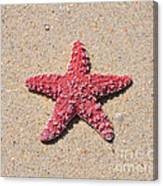 Sea Star - Red Canvas Print