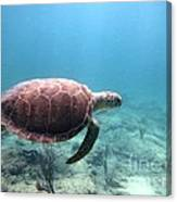 Sea Turtle 5 Canvas Print