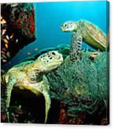 Sea Turtle Oil On Canvas Canvas Print