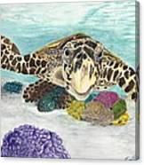 Sea Turtle Hello Canvas Print