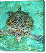 Single Sea Turtle Swimming Through The Water Canvas Print