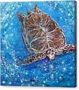Sea Turtle Mr. Longevity Canvas Print
