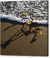 Sea Weed And A Wave Canvas Print