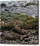 Sea Weed Canvas Print